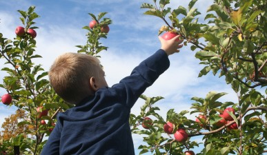 CM-kids-apple-pick-2009-2nd-place-387x225